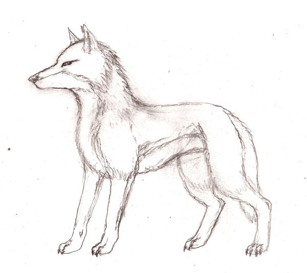 Wolf side view drawing - photo#3