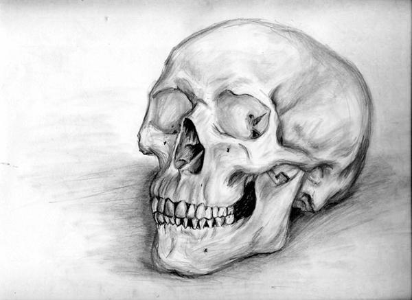 Skull by causelessdemon
