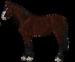 Lucy's horse Ashwin
