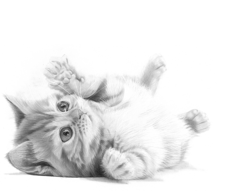Puddy Cat by KevinPreston