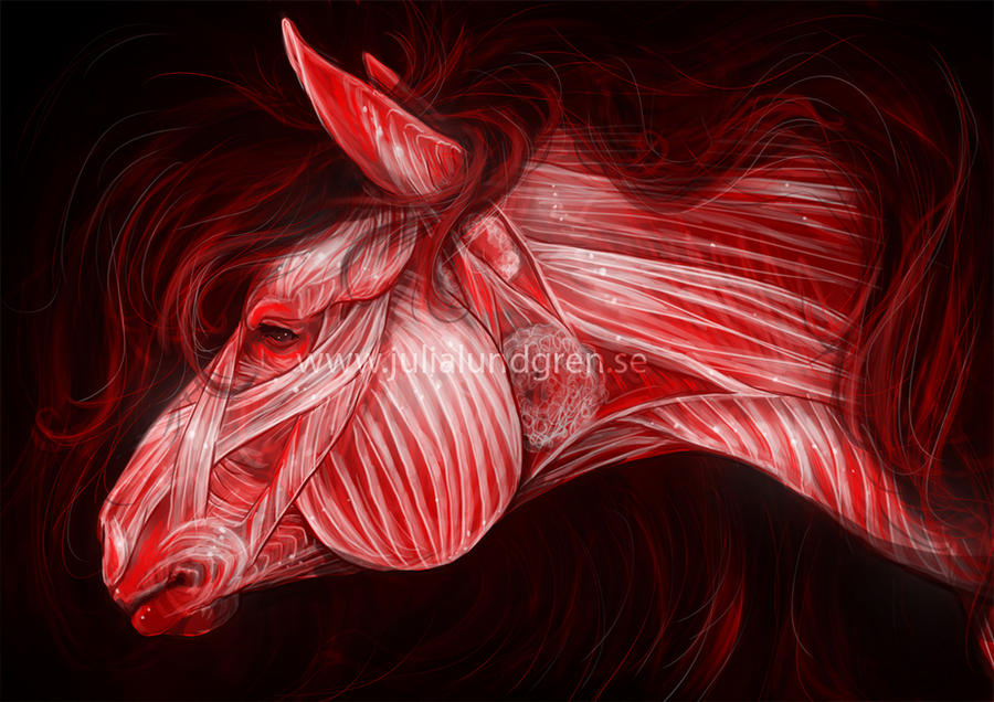 Anatomy practice - horse facial muscles by Lambidy on DeviantArt