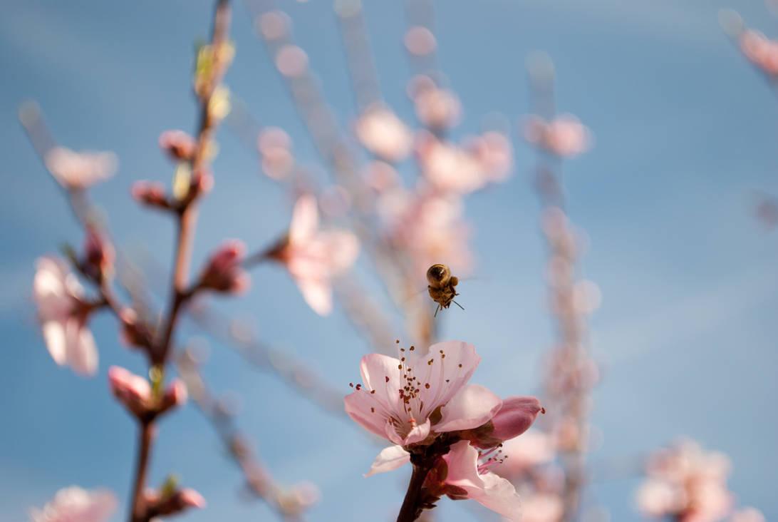 Honey Bee Dos