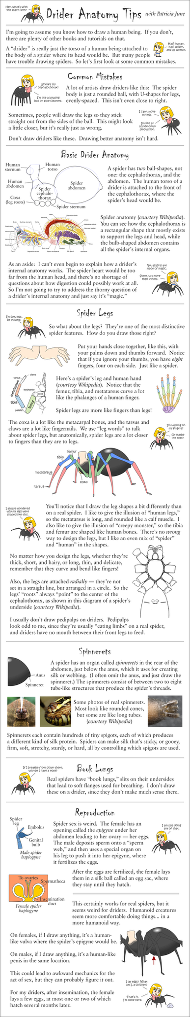 Drider Anatomy Tips by phantom-inker on DeviantArt