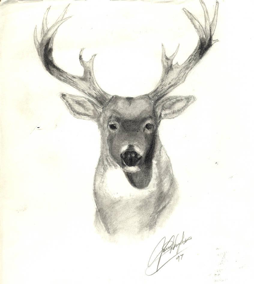 Deer pencil sketch by hambone79
