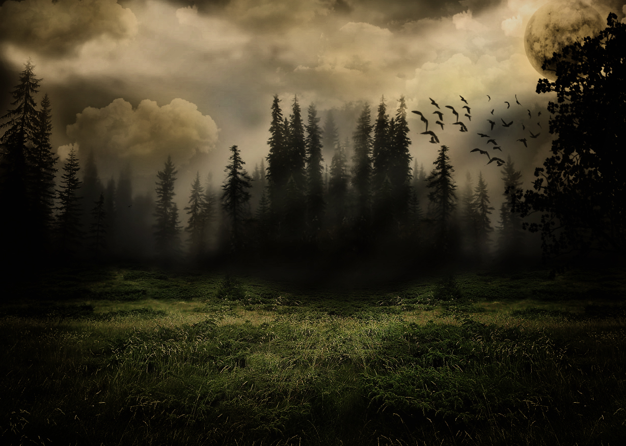 Dark Forest by Aker89 on DeviantArt