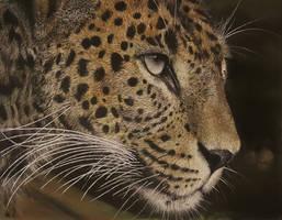 Sri Lankan leopard by SriramGubbi