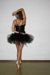 black swan stock 16
