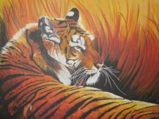 beautiful tiger by naantjegirl
