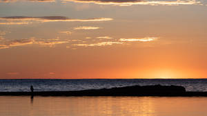 Cormorant at dawn