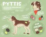 Pyttis 2015 by Pyttinski