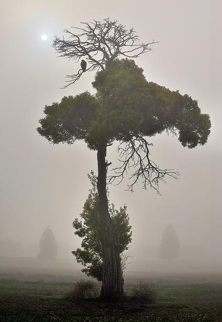 Foggy Morning by enunez