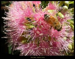 Boring Bee