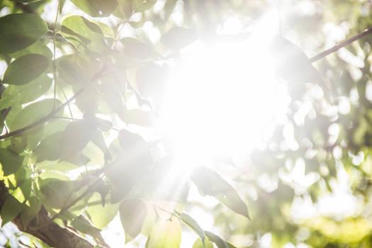 Sunrays 04