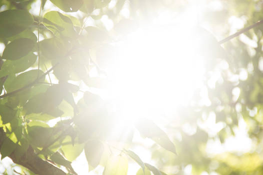 Sunrays 05