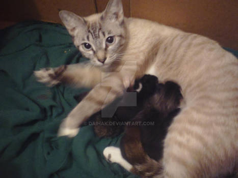 Cookie and babies..