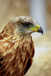 Bird by declicG