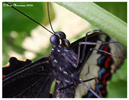 Butterfly Macro by BreeSpawn