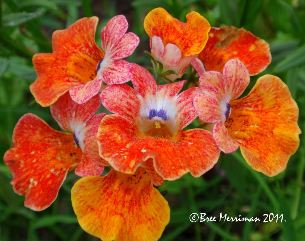 Spring Flowers V by BreeSpawn