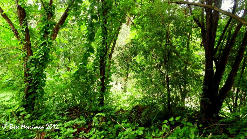 Vine Forest by BreeSpawn