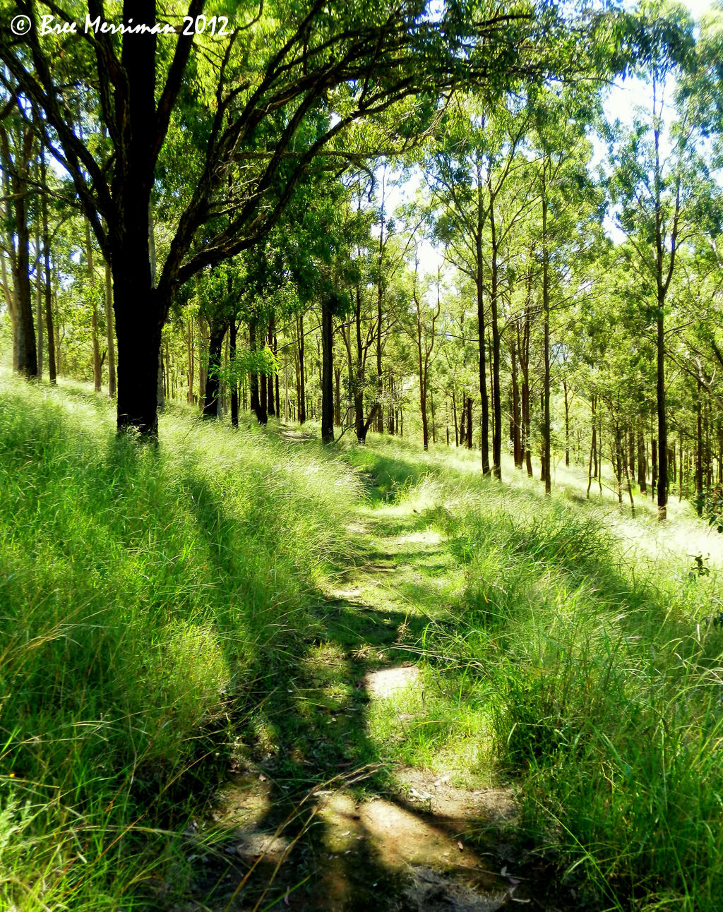Enlightened Pathway by BreeSpawn