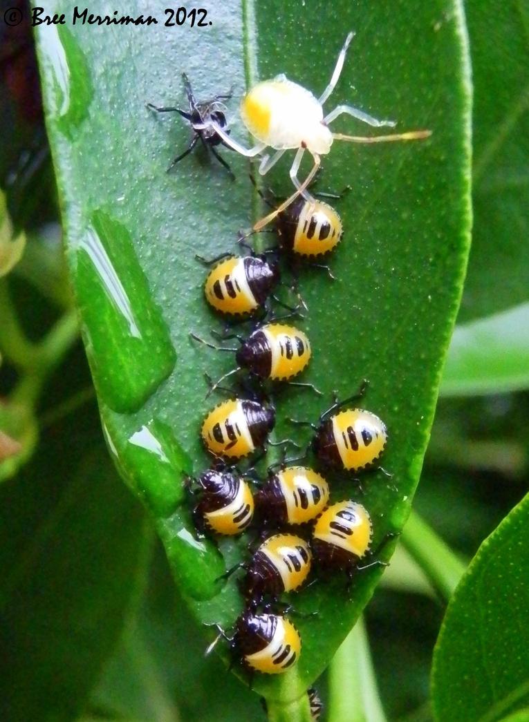 Baby Bugs by BreeSpawn