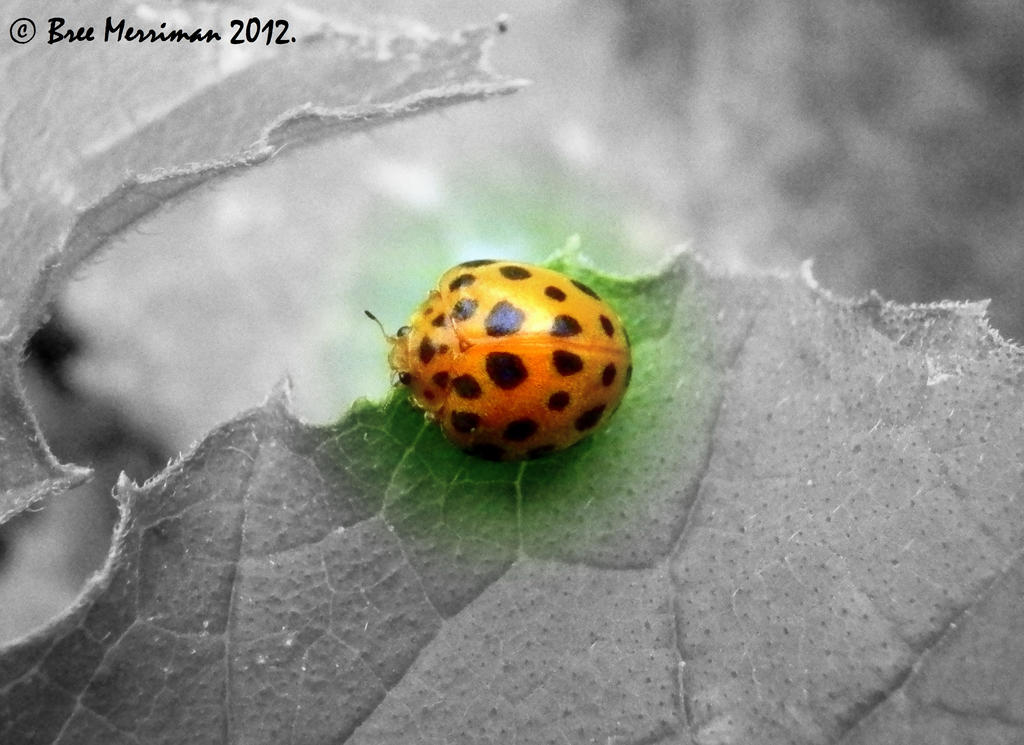 21 Spot Bug Macro by BreeSpawn