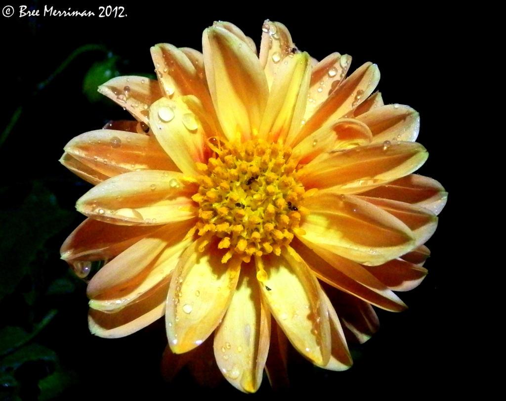 Dripping Flower by BreeSpawn