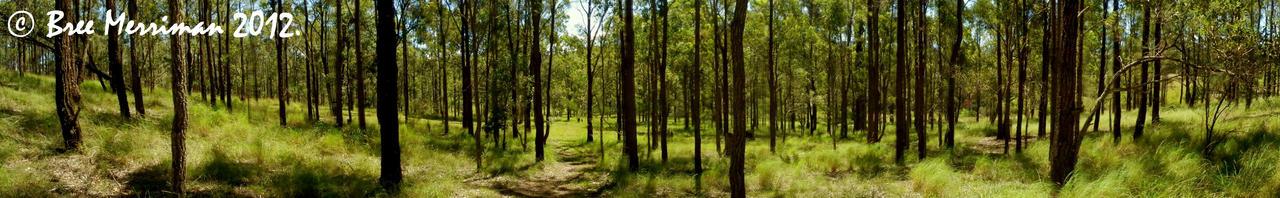 WoodLand Panorama by BreeSpawn