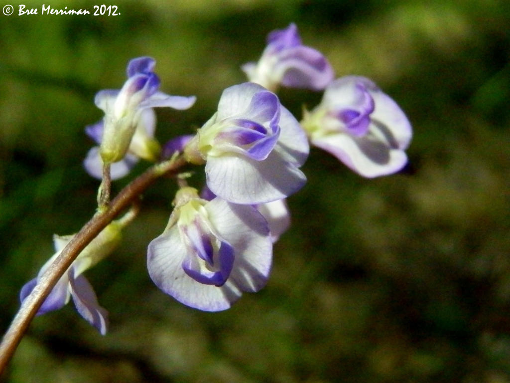 Native Flowers Macro by BreeSpawn