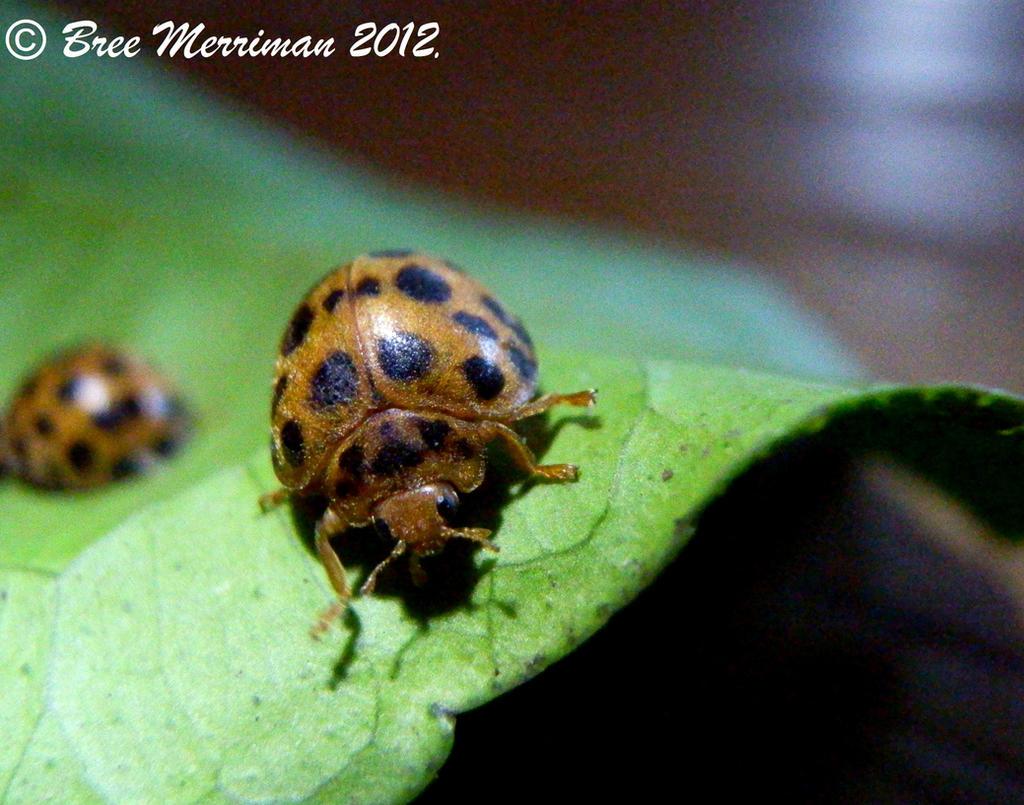21 Spot Bug Macro II by BreeSpawn
