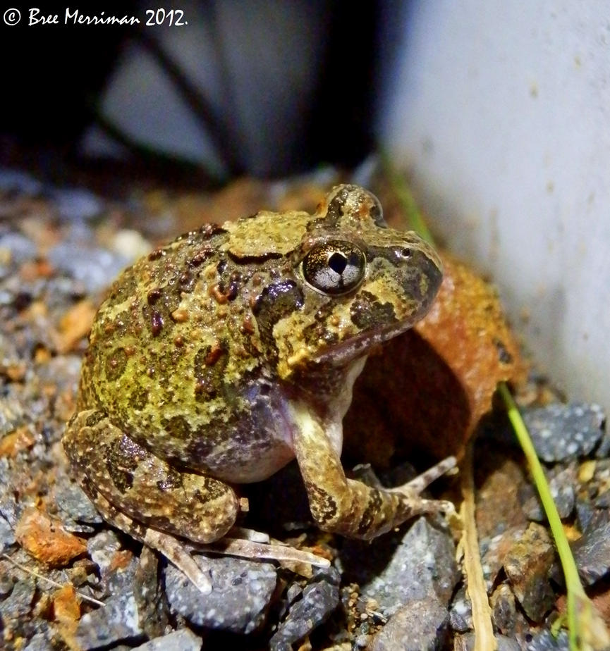 Frog Macro by BreeSpawn