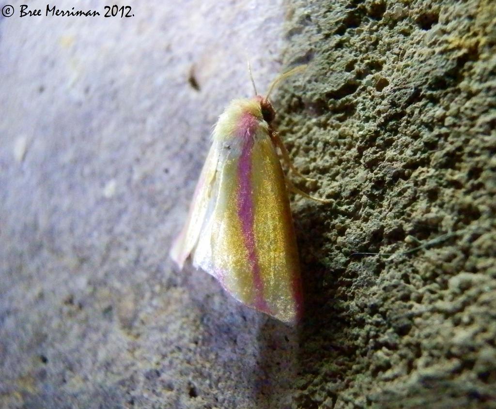 Unknown Moth by BreeSpawn