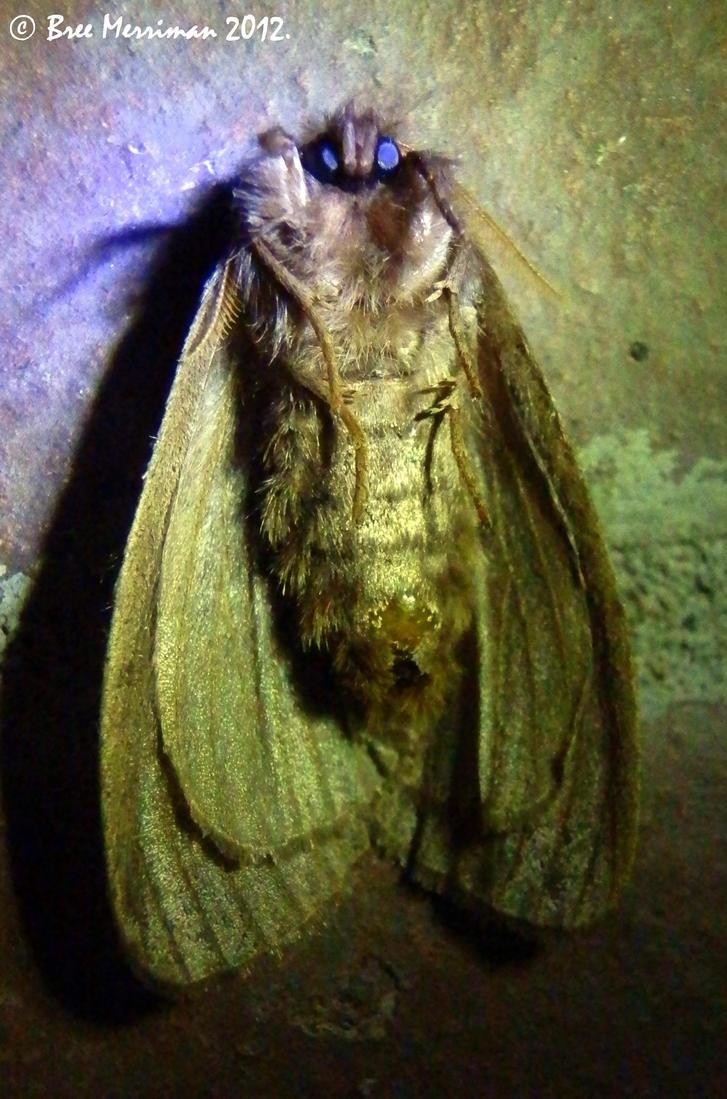 Moth Mugshot by BreeSpawn