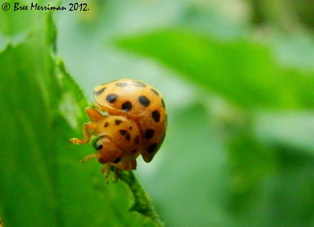 28 Spot Bug by BreeSpawn