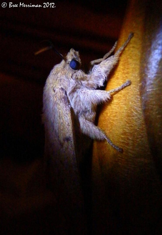 Moth Invader by BreeSpawn