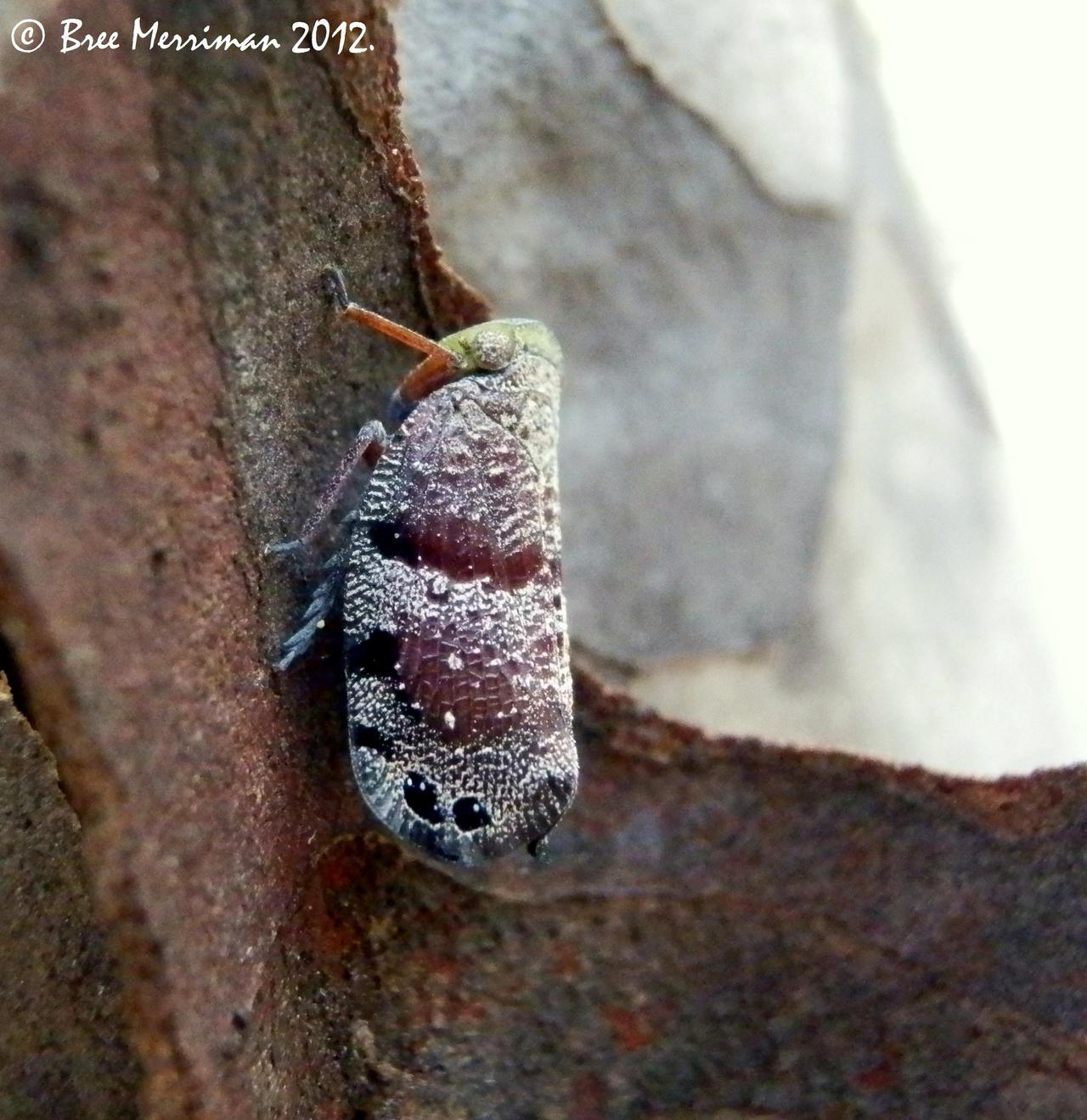 Leaf Hopper by BreeSpawn