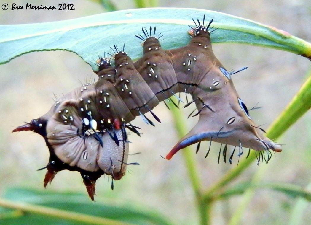 Moth Catapillar by BreeSpawn
