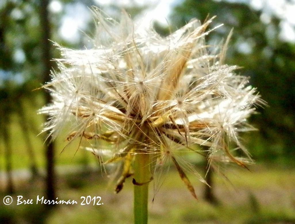 Seed Pod by BreeSpawn