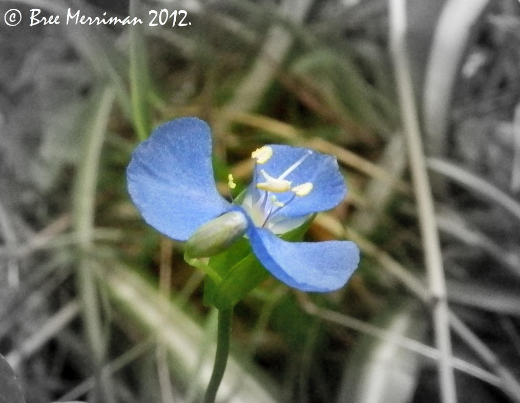 Macro Native Flower by BreeSpawn
