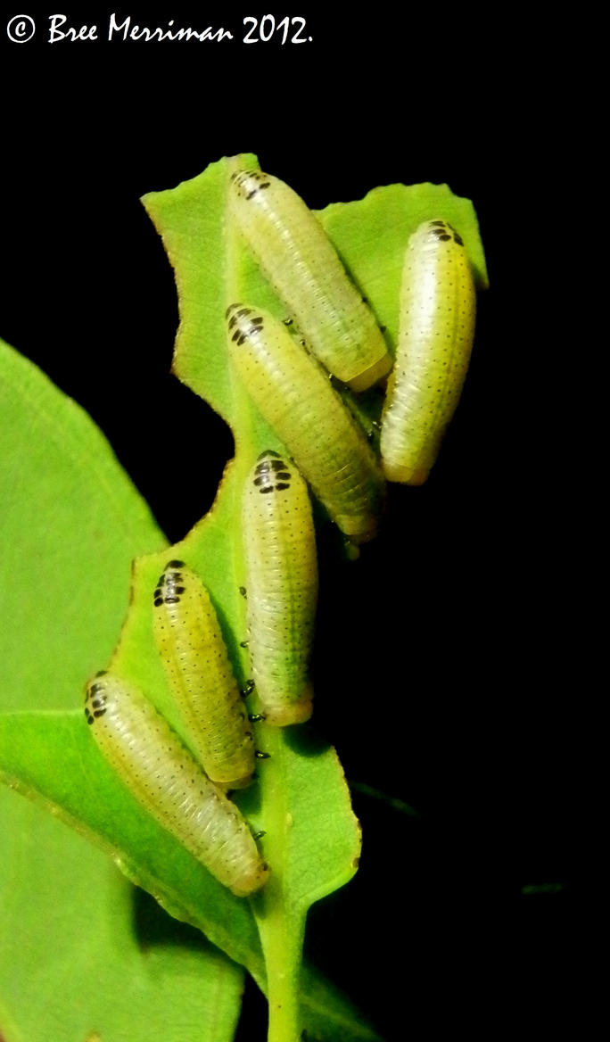 Little Green Caterpillar by BreeSpawn