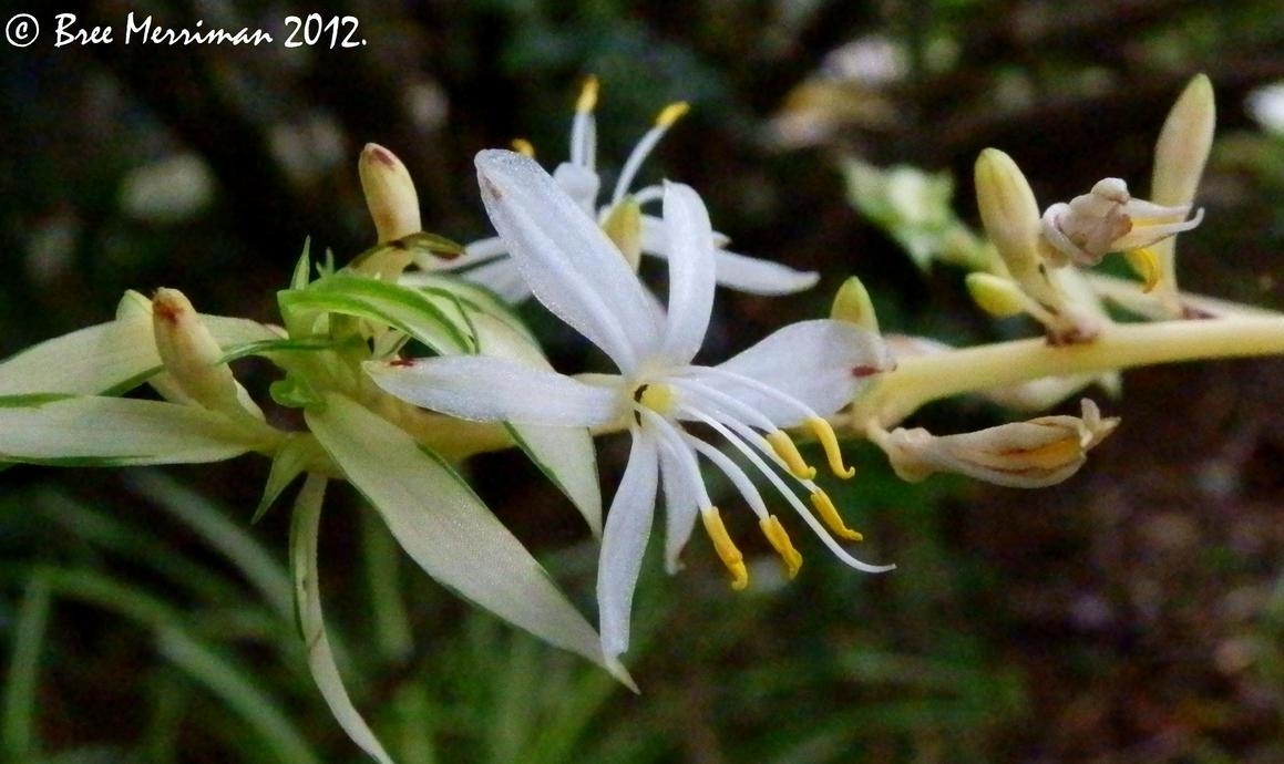 White Flower Macro by BreeSpawn
