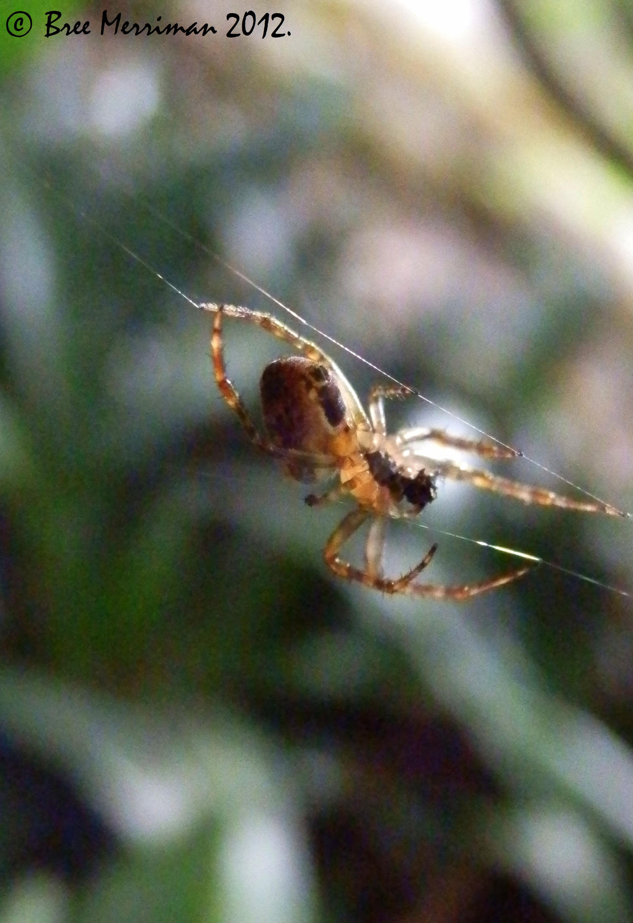 Spider Macro by BreeSpawn