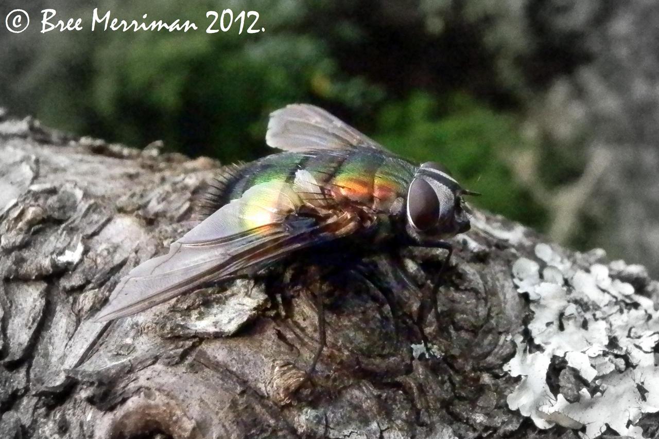 Blow Fly by BreeSpawn