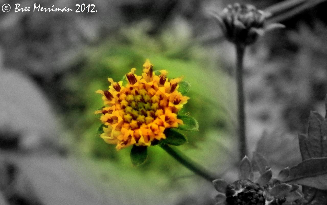 Flower Macro by BreeSpawn