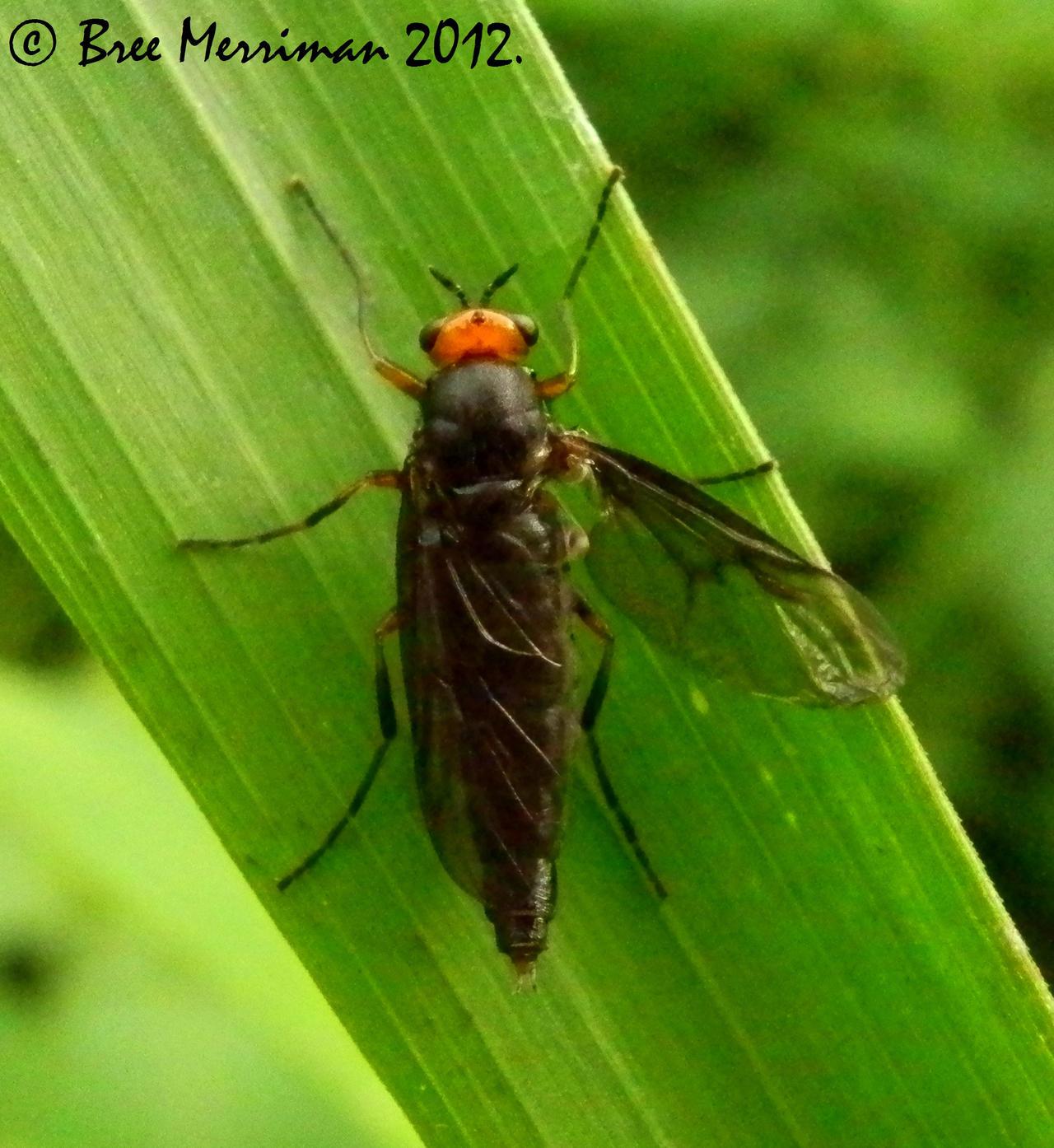 Sawfly by BreeSpawn