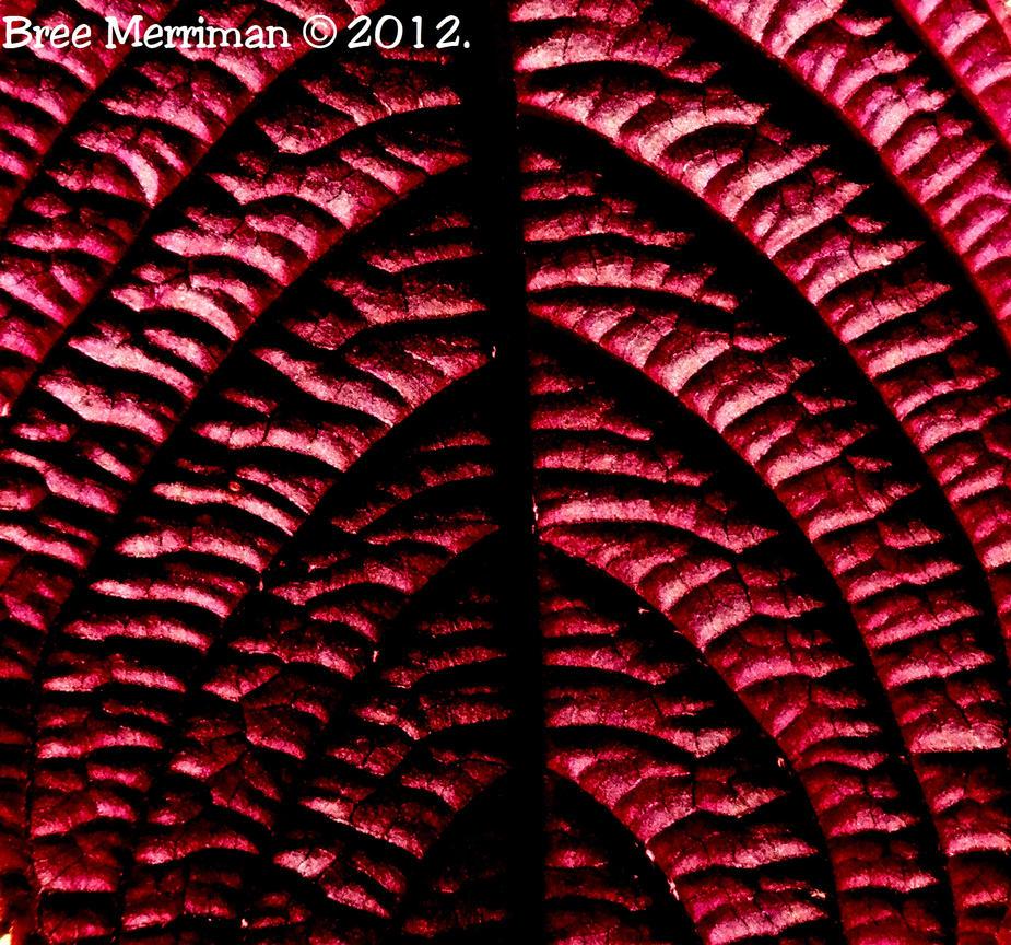 Macro Leaf by BreeSpawn