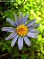 Little Flower I by BreeSpawn