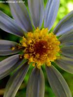Little Flower II by BreeSpawn
