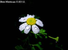 Daisy Drops I by BreeSpawn