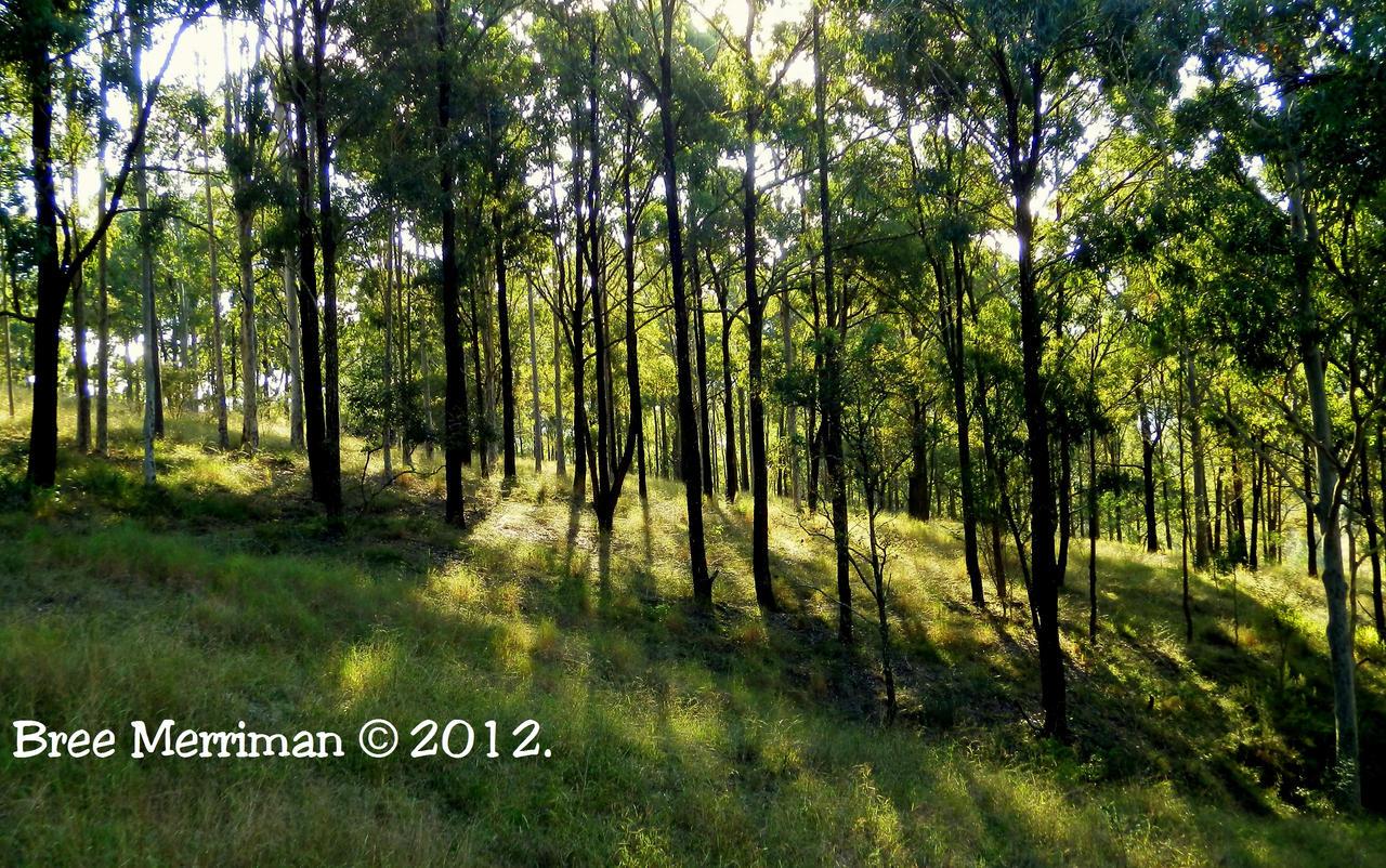 Landscape by BreeSpawn